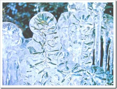 ice-plant