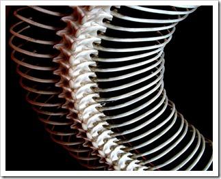 人骨、骨の画像