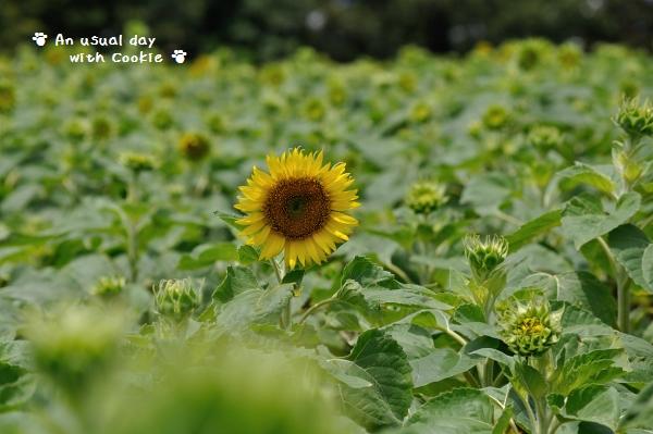 himawari2_5008.jpg