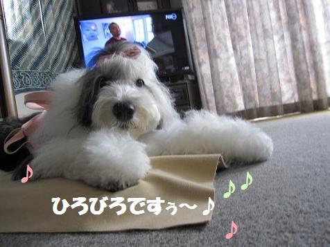 Cookie_20130910221601932.jpg