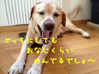 1_20130614143439.jpg