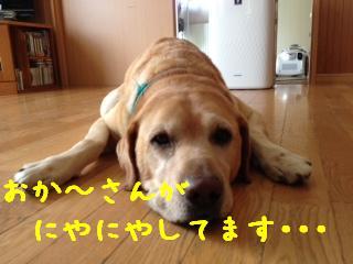 1_20130917143413c10.jpg