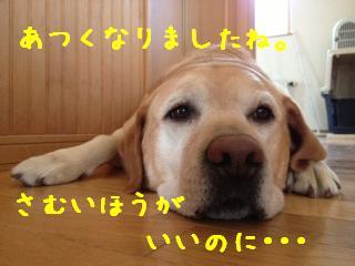 2_20130802145859876.jpg