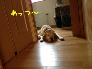 2_20130807140340853.jpg