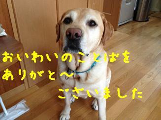 IMG_0377_20130702105604.jpg