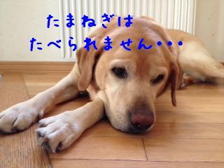 ___20130718143858.jpg