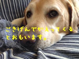 ___201308061446359ab.jpg