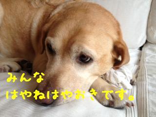 ___2013090210361312f.jpg