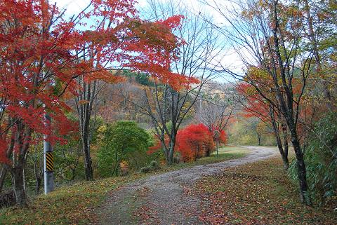面ノ木の紅葉が