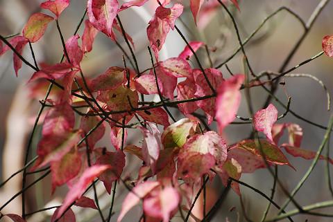 この葉がきれい?