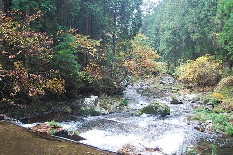 菅沼川の紅葉が