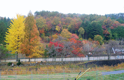 学校林の紅葉がきれい