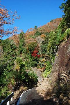 崖の上の紅葉が