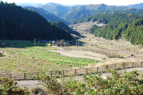 千枚田の風景