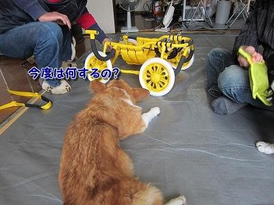 車いす (1)