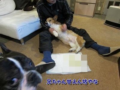 マッサージ (3)