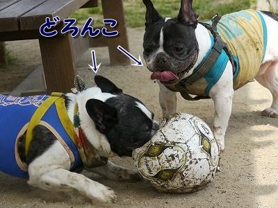 ボール (8)
