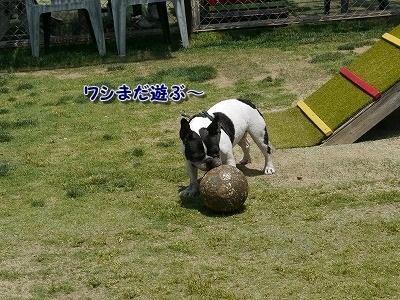 ちょっかい (1)
