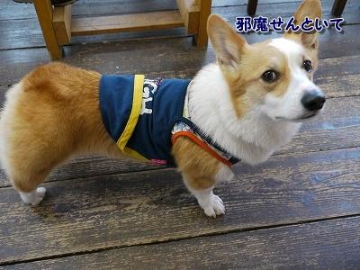 ちょっかい (5)
