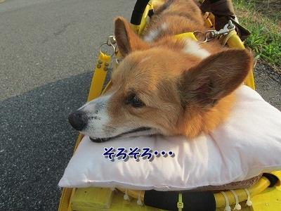 お散歩 (5)