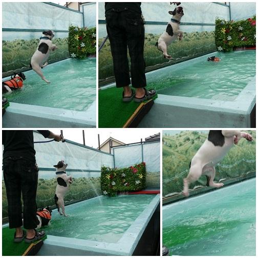 飛び込み (2)