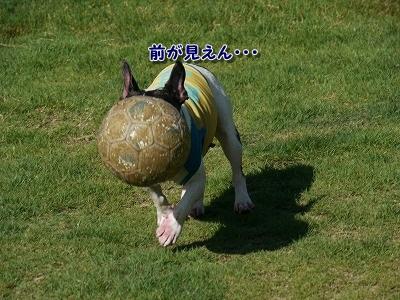 ドッグラン (4)