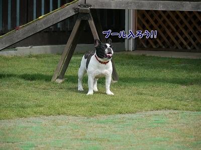 ドッグラン (8)