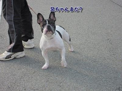 散歩 (4)