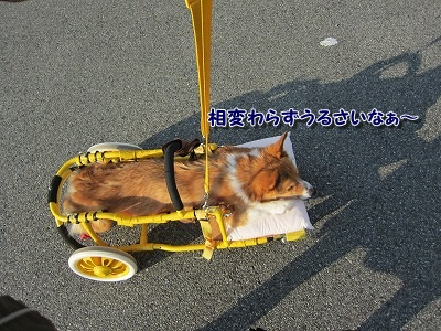 散歩 (7)
