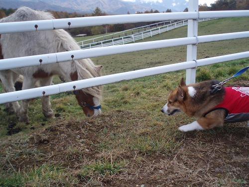 初めまして、お馬さん