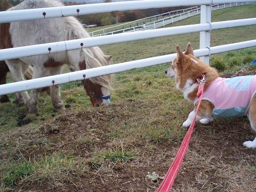こんにちわん、お馬さん