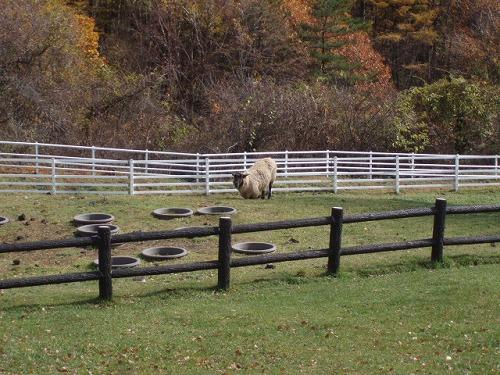 羊さんの休憩