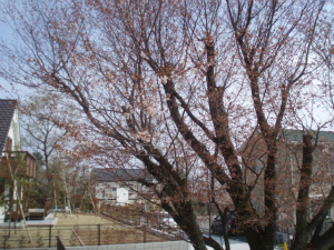 春、桜の終りの頃