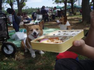 シウマイ弁当越しのまりんちゃん