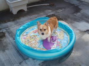 モモも大好きなプールで