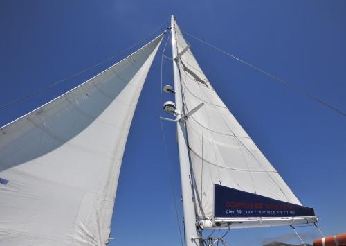 A Cat Sails