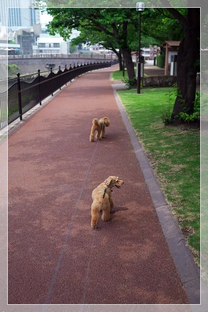 朝一散歩04