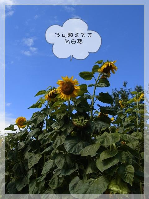 梅雨の過ごし方03