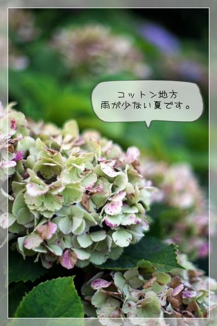 夏生活C01
