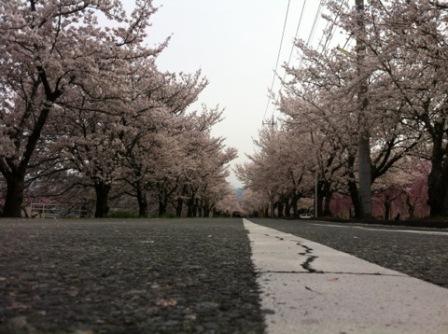 桜トンネル (1)