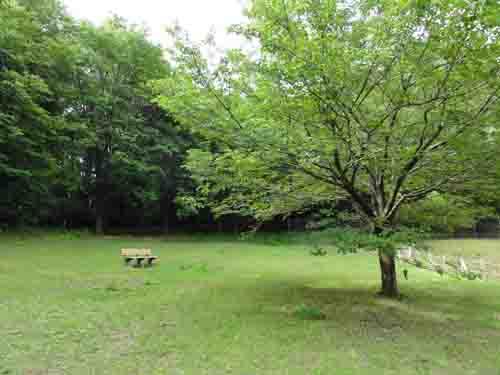 ryokuchi02920.jpg