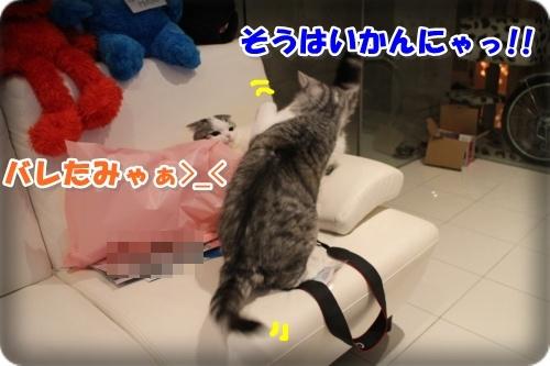 3-003_20131106001511ba3.jpg