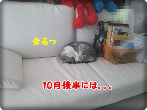 DSC_1988_20131103020241931.jpg