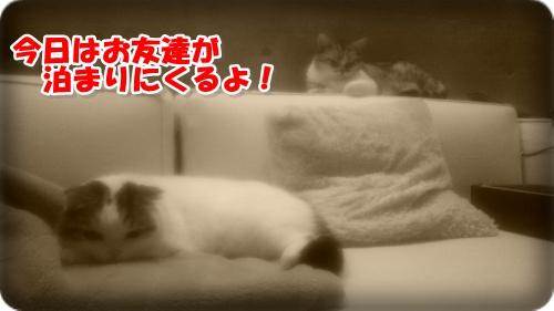 DSC_2009-002.jpg