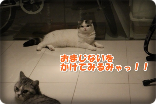 IMG_0274-028.jpg