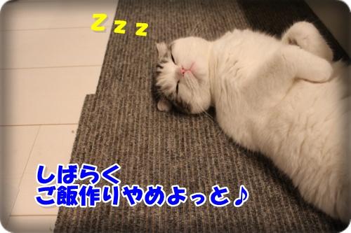 IMG_2490-001.jpg