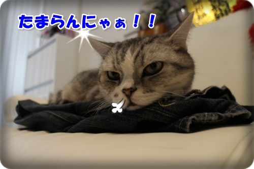 IMG_3120-003-1.jpg
