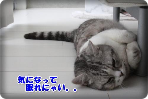 IMG_5148-001.jpg