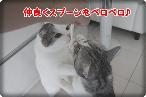 IMG_5627.jpg