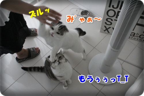 IMG_5817-020.jpg